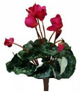 Cyclamen artificial plant - Red