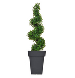 Artificial Spiral Buxus Tree in black vase