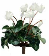 Cyclamen artificial plant - White