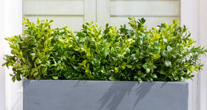 Artificial boxwood bush