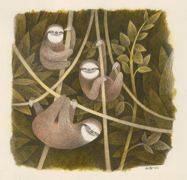 Kim Slate - Three Three-Toed Sloths