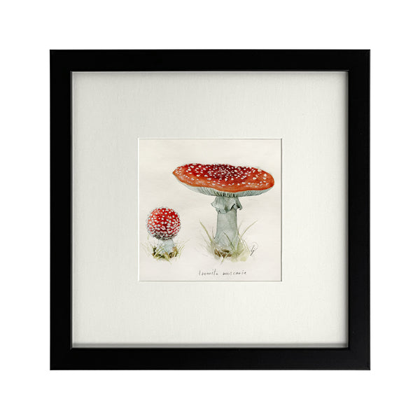 Lily Seika Jones - Study of Toadstools