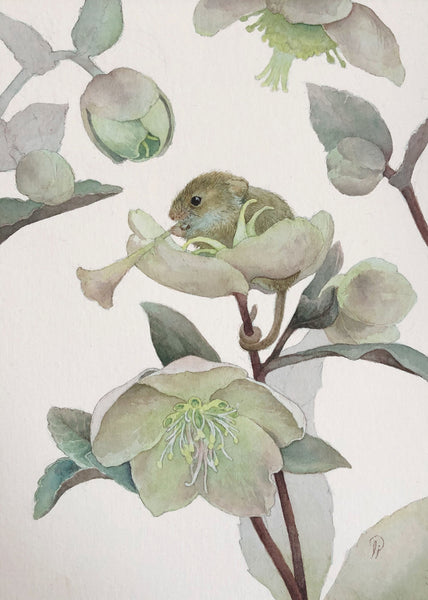 Lily Seika Jones - Hellebore
