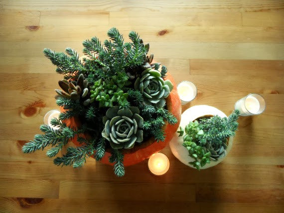 Succulents in Pumpkins Thanksgiving Centerpiece DIY