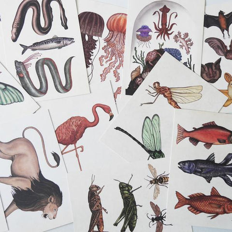 Animalium Postcards Collection (Set of 50), sample postcards