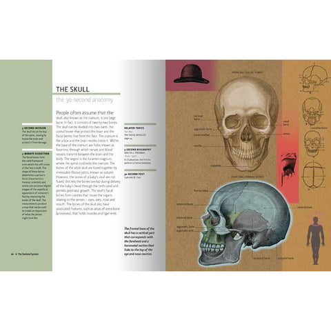 30-Second Anatomy, inside page on the brain