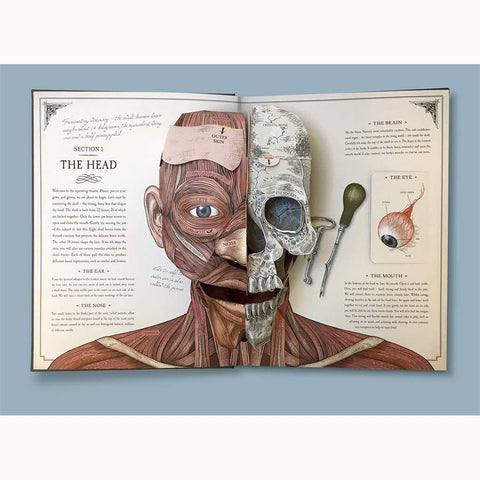 The Human Body - A Pop-Up Guide to Anatomy, face pages