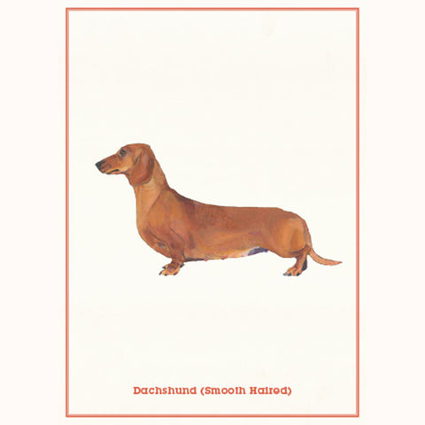 Dog Postcards - Daschund postcard