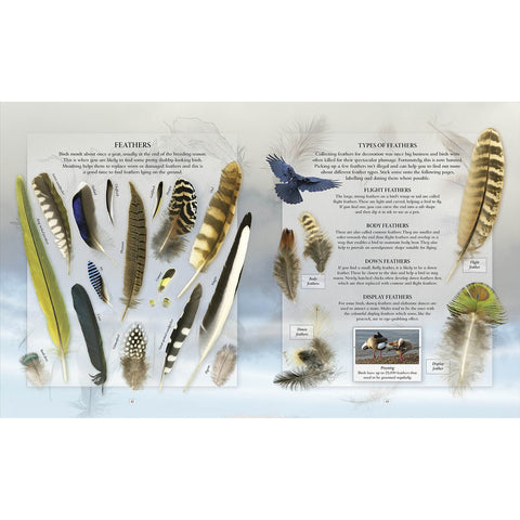 The Nature Explorer's Scrapbook, feather pages