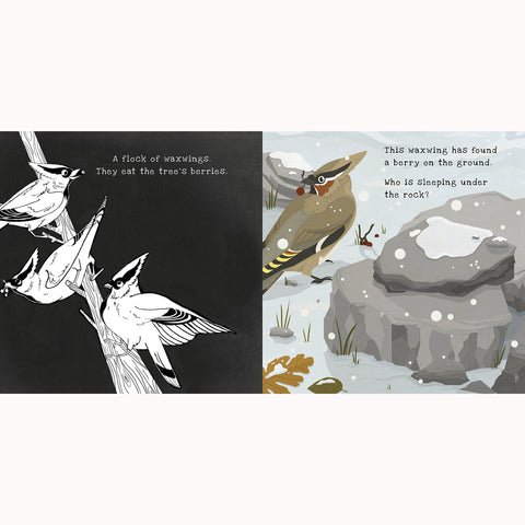 Secrets of Winter - A Shine-A-Light Book, bird in snow page