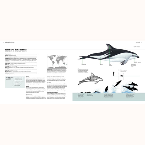 Whales, Dolphins and Porpoises, page sample 2