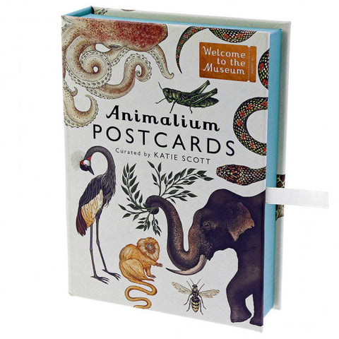 Animalium Postcards Collection (Set of 50), boxed