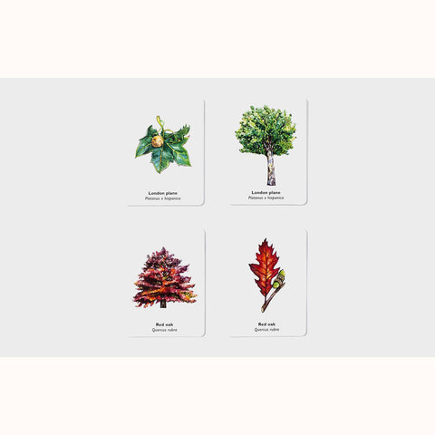Match A Leaf - A Tree Memory Game, 2 pairs of sample cards