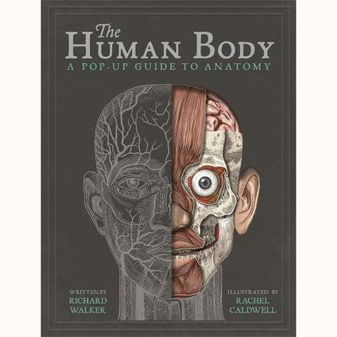 The Human Body - A Pop-Up Guide to Anatomy, front cover