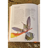 Hummingbirds - A life size guide to every species, inside