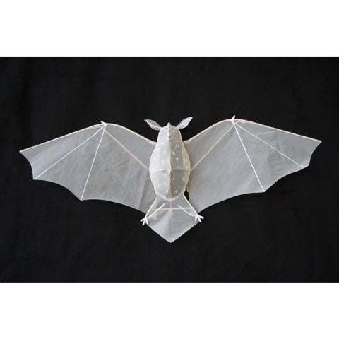 Little Bat Kite, full wing span displayed