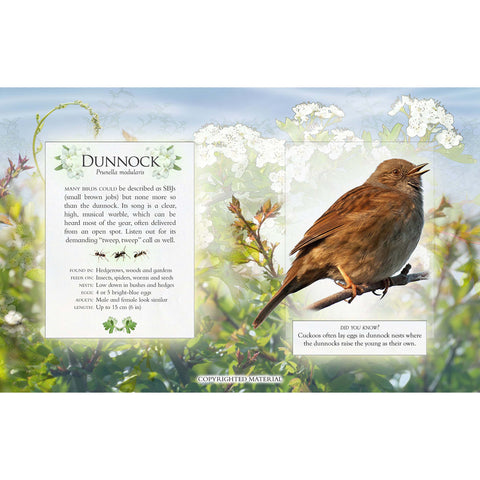 Little Book of Garden Birdsongs dunnock