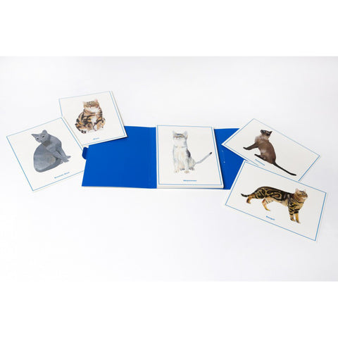 Cat Postcards, open pack with sample of postcards