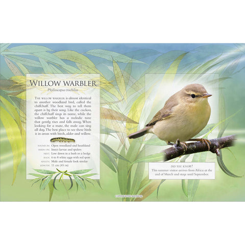 Little Book of Woodland Bird Songs willow warbler page