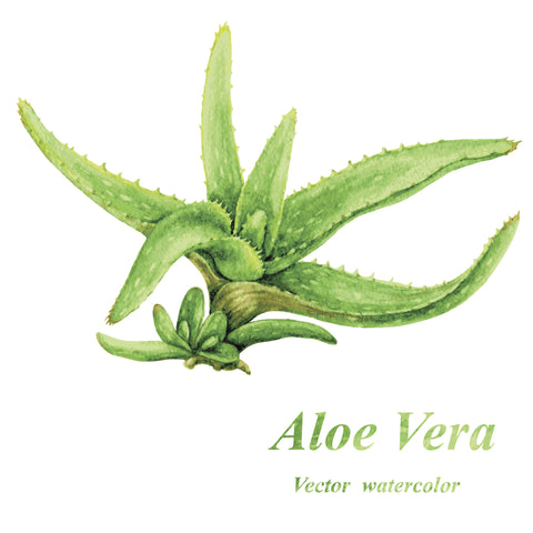 Using Aloe Vera for sunburns