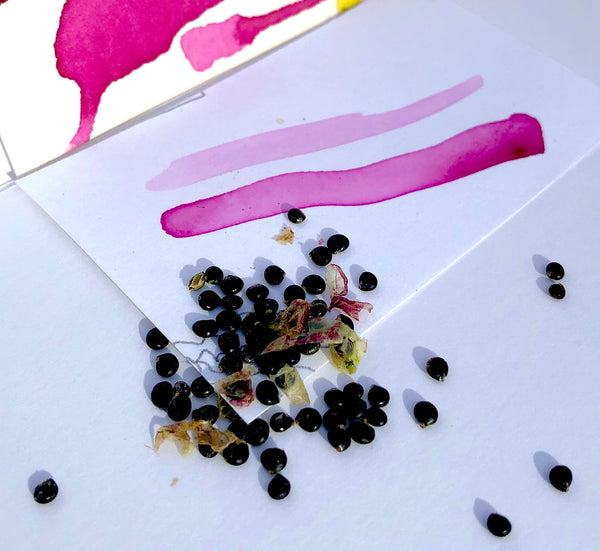 Pokeberry seeds
