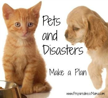 National Pet Appreciation Week and Pet Preparedness Month