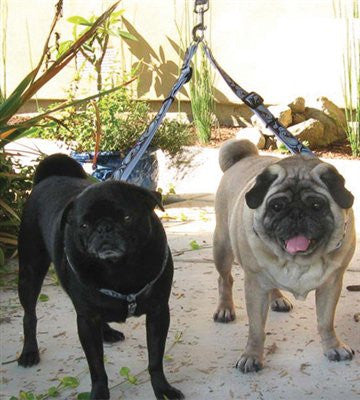 Diva-Dog Camelot Leash Extenders - ZoeDoggy of Beverly Hills