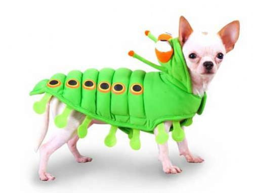 Caterpillar Costume Dog Costume