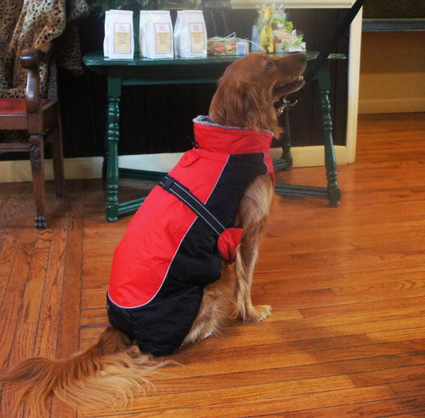 Alpine All Weather Dog Coat - Red and Black - ZoeDoggy of Beverly Hills