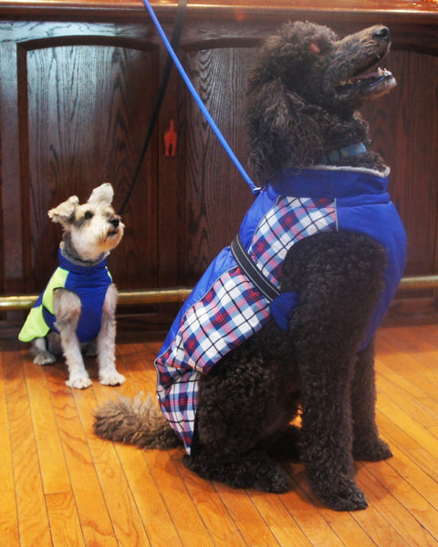 Alpine All Weather Dog Coat - Royal Blue Plaid - ZoeDoggy of Beverly Hills