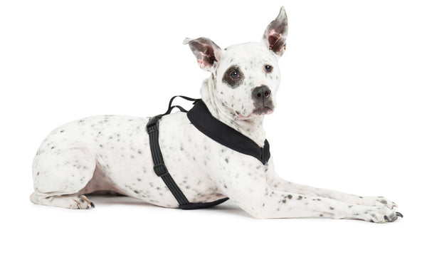 Gold Paw Series Crossover Harness - ZoeDoggy of Beverly Hills