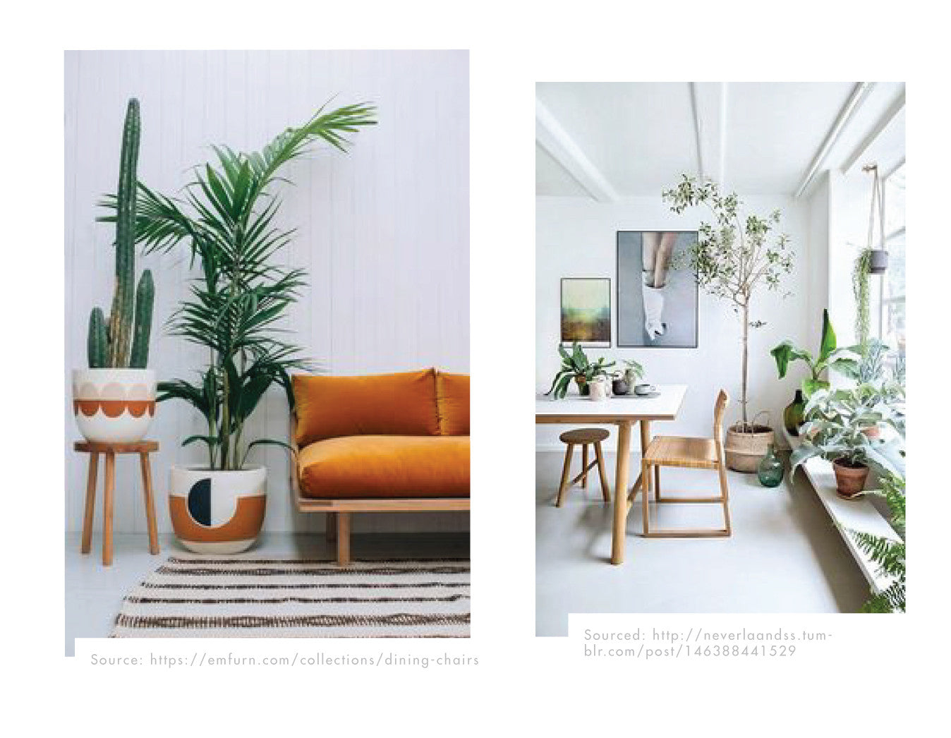 renew/plants-for-the-home/blog/beinspired/lulasclan