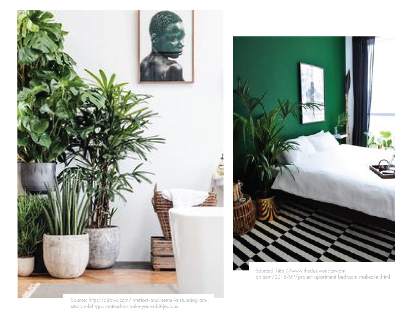 green-plants-for-the-home/renew/blog/beinspired
