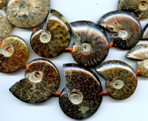 Ammonite Fossil Beads BME6636