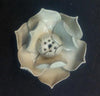 Porcelain Lotus Incense Holder