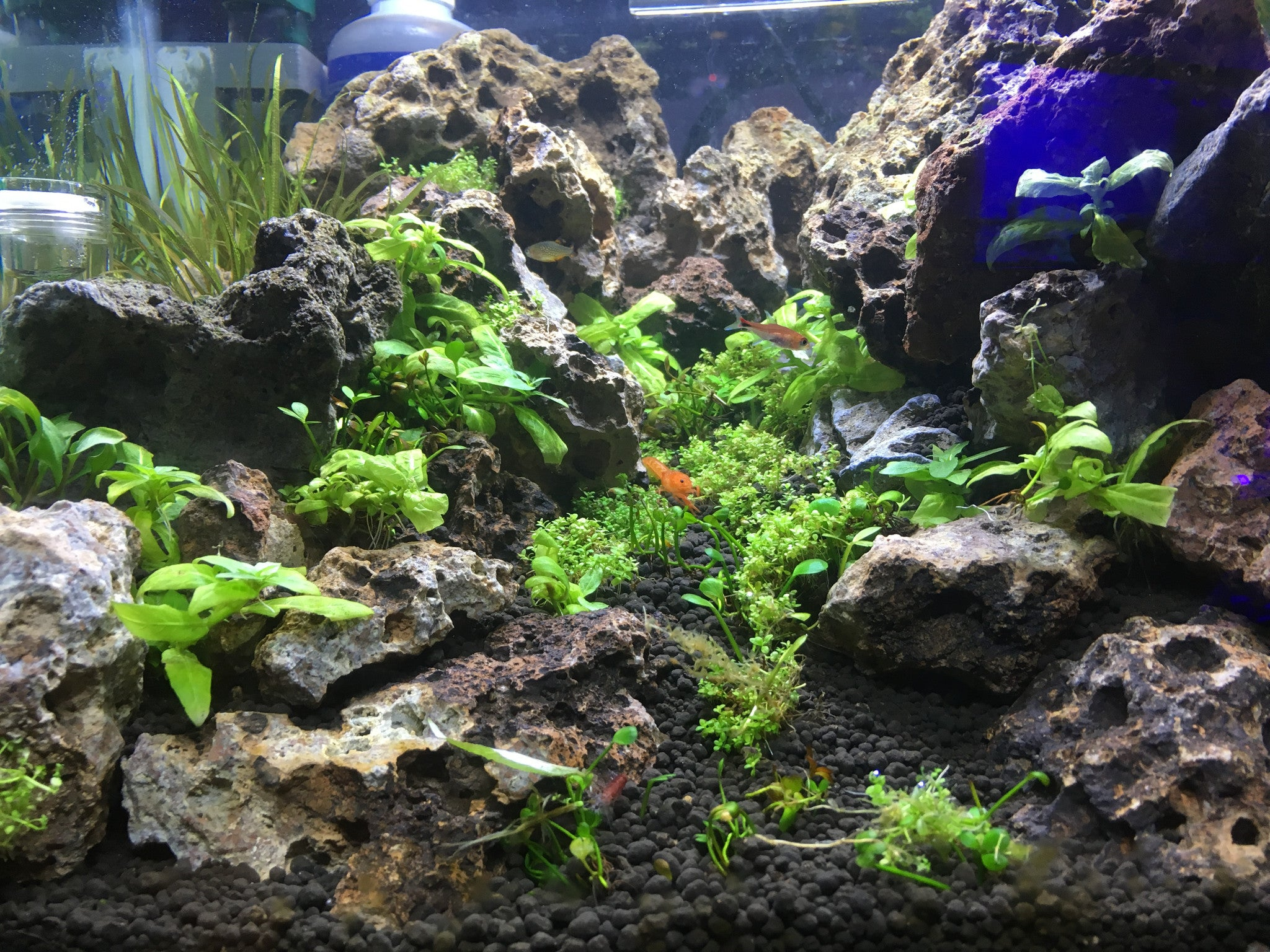Schools of fish best aquariums for your dorm room fish for Best aquarium fish
