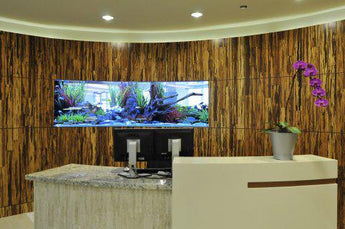 Commercial Fish Tanks - An Added Value