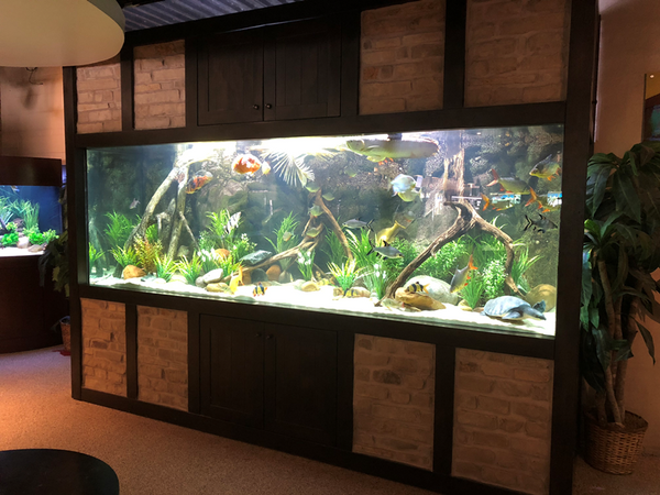 1250 Gallon Aquarium with Custom Brick Inlay and River Insert