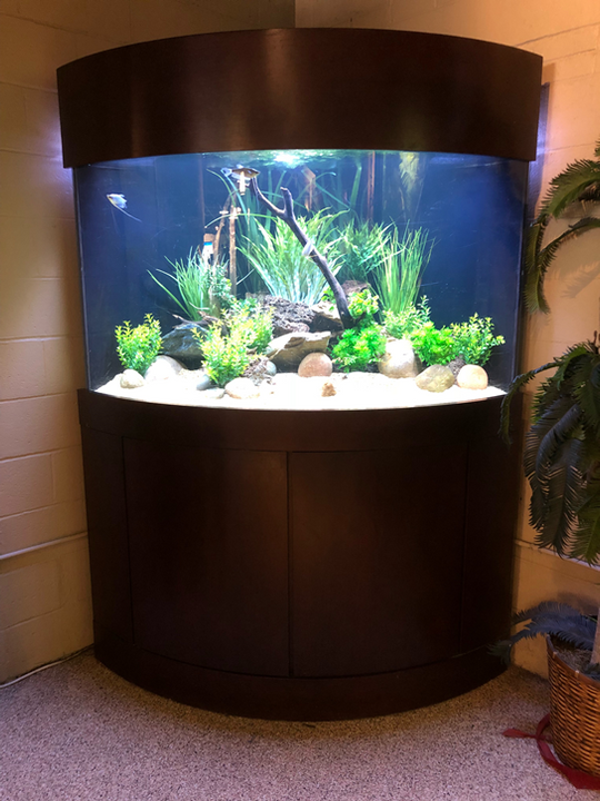 200 Gallon Corner Bow Front