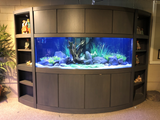 395 Gallon Bow Front Aquarium
