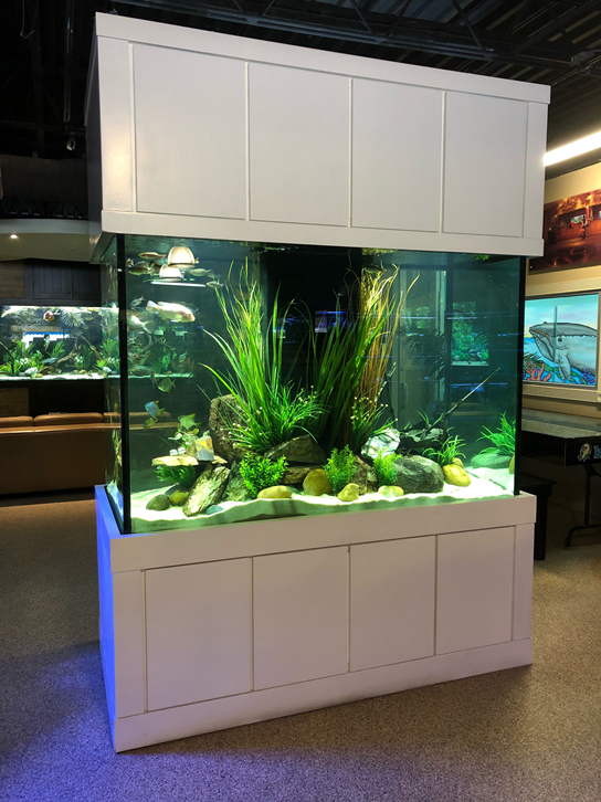 530 Gallon Island Style Aquarium