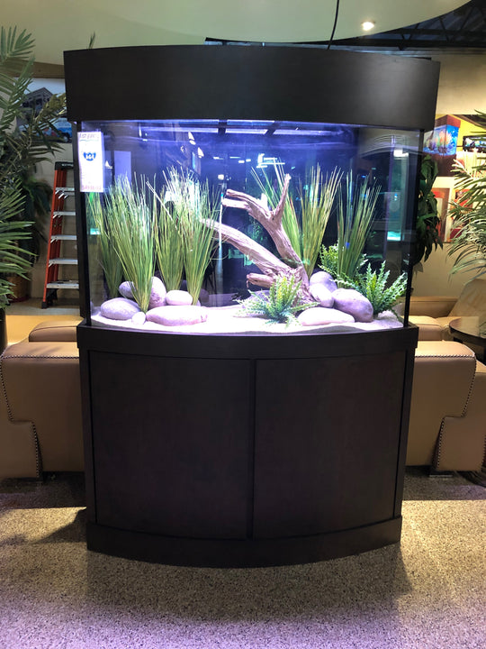 110 Gallon Bowfront