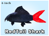 "6"" Red Tail Shark"