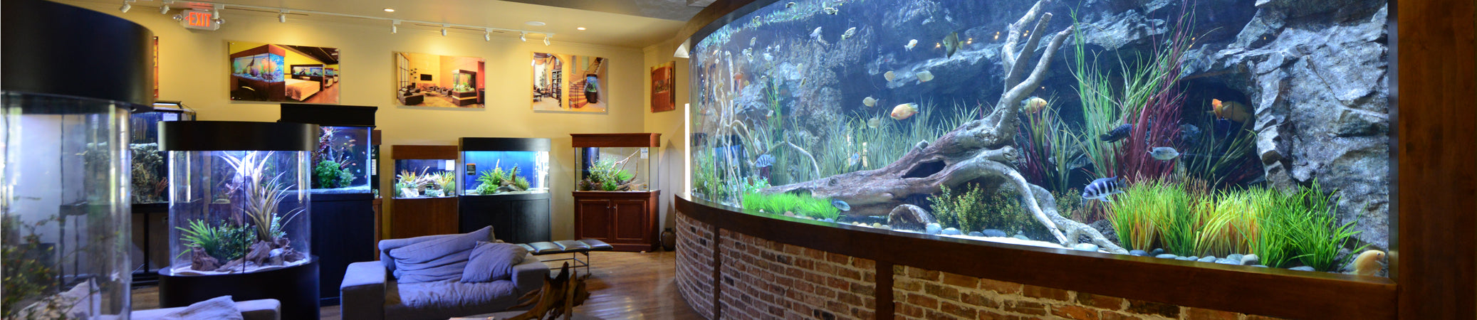 Freshwater aquarium fish houston - Houston Team