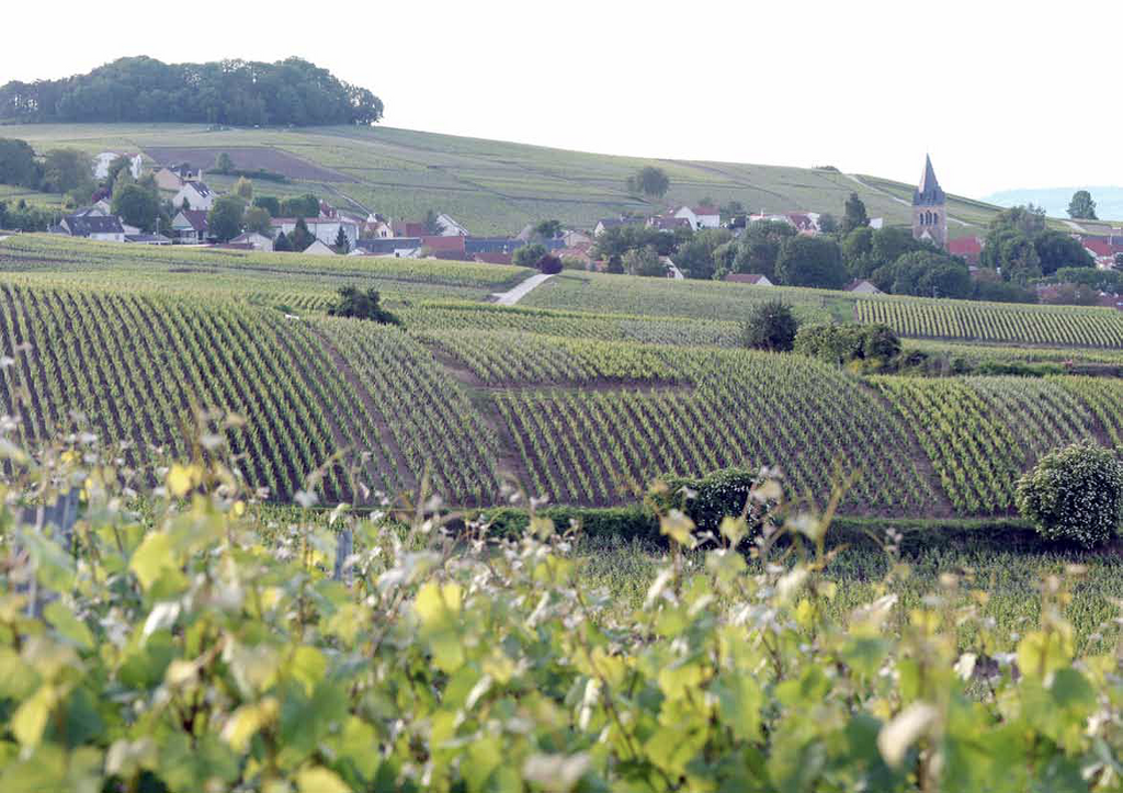 Wine Travel: Champagne