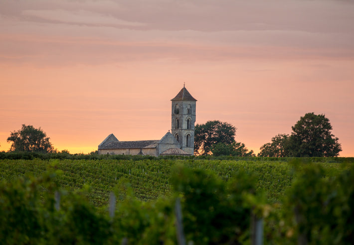 Meet the Six New Grape Varieties Approved in Bordeaux: Resilience at the Forefront of the Climate Change Adaptation Revolution