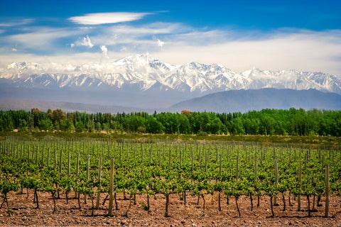 Mendoza Andes Vineyards