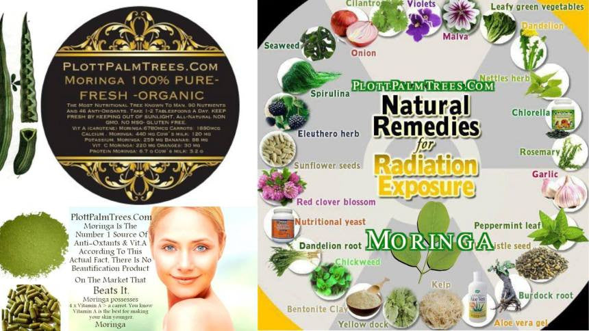 Moringa Oil: All-Natural Hair Therapy ERIC GEOFFREY VON LEONARD PLOTT