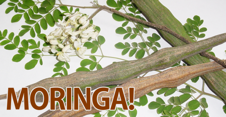 Science: Antioxidant Activity of Moringa oleifera Tissue Extracts.