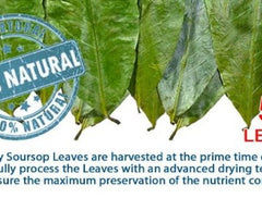 # 1 Graviola /Soursop leaves (guanabana)